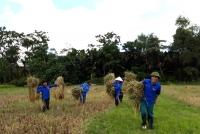 Thành Đoàn Hà Tĩnh, Huyện đoàn Vũ Quang: Giúp đỡ các gia đình chính sách, gia đình có hoàn cảnh khó khăn thu hoạch mùa